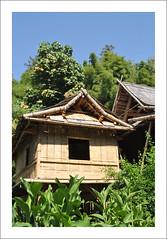 Bambouseraie de Prafrance (Cévennes) (sudfrance30) Tags: jean jardin du bouddha bamboo des national zen parc sequoia bambou gard languedocroussillon alès anduze bambouseraie lozère cévennes bambous prafrance générargues parcnationaldescévennes filou30 vallondudragon sudfrance30