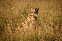 (Squirl House) Tags: africa house kenya safari mara cheetah maasai squirl squirlhouse