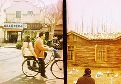 Bike birds (Roon & Beks) Tags: china rollei golden xpro cross shanghai frame half process crossbird