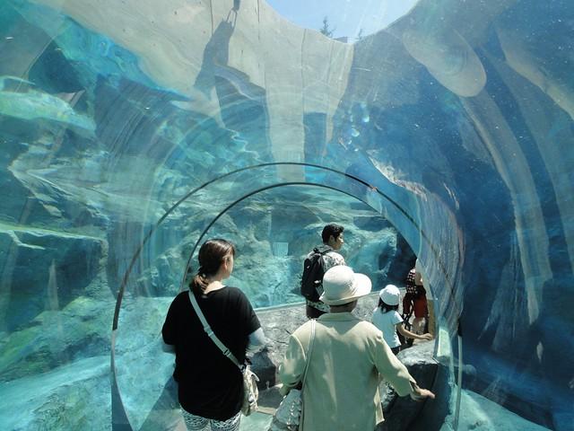 ペンギン館の水族館のような水中トンネル|旭川市旭山動物園