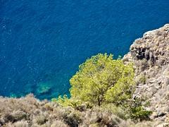 00158 Arbol mirando al mar (anggarfer) Tags: blue sea cliff mountain tree verde green azul arbol mar spain flickr murcia monte cartagena acantilado calblanque espana montedelascenizas anggarfer