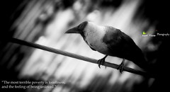 Lonely Crow (TanVeeR A. Mrinmoy) Tags: bw white black bird alone loneliness wildlife lonely crow bangladesh