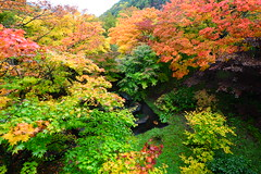 Colours of Autumn (Vincent_Ting) Tags: autumn fall leaves japan stream aomori  maples milky silky      oirase      northeastjapan oirasekeiryu   oirasekeiryuhotel vincentting  vision:mountain=0586  vision:plant=0788 vision:outdoor=0736