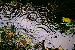 Photo24_20A - Copy (Ben Fruen) Tags: water 35mm fuji minolta superia 400 ripples dynax xtra 7000i