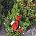 Trees_of_Loop_360_2013_066