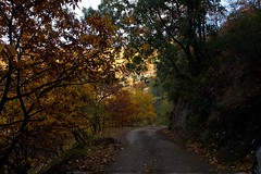 Caminos de otoo /  Fall paths (Jos Rambaud) Tags: autumn fall forest arbol camino path andalucia bosque otoo malaga castao chesnut serraniaderonda vision:plant=0728 vision:outdoor=078 vision:sky=0658