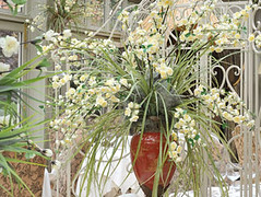 "Wedding Flowers Coventry - Nuleaf Florists <a style=""margin-left:10px; font-size:0.8em;"" href=""http://www.flickr.com/photos/111130169@N03/11309585006/"" target=""_blank"">@flickr</a>"