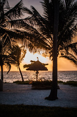 Can never get enough of this (yannhock) Tags: africa sunset sun holiday beach backlight landscape sand honeymoon palm zanzibar hdr contrejour