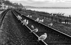 'Poor man's Colville' (Canadapt) Tags: bench track geometry seagull rail whiterock semiahmoobay alexcolville canadapt bestcapturesaoi elitegalleryaoi