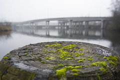Moss (SmallTransgressions) Tags: seattle bridge fog islands landscapes moss post arboretum marsh 520