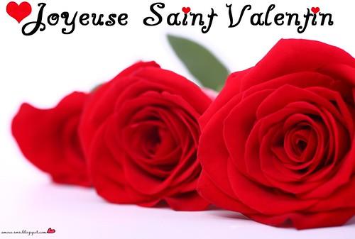 Joyeuse Saint Valentin Fleur 003 A Photo On Flickriver