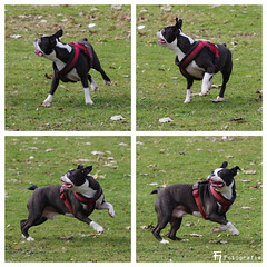 Henry in motion