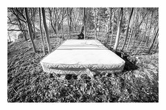 Sleep On It (roymondus) Tags: urban toronto bed woods sleep sony surreal fisheye rest mattress bower8mmf35 slta37