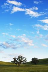 Curves II (killersnowman) Tags: sunset tree drive vineyard oak sony hill curves hills curve templeton pasorobles a7r