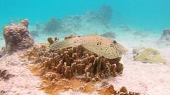 Snorkeling At Webers Joy, Bonaire