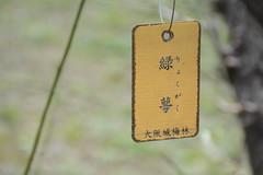 image (yhshangkuan) Tags: flower japan   plumflower  2015   2015 2015