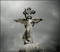 Fallen Angels 4 (edu_izu) Tags: blackwhite cementerio izu gotico comillas