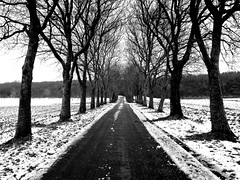 Winter perspective (mujepa) Tags: road street trees winter snow france path hiver perspective route arbres neige chemin planetree allée platanes soetrich