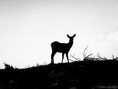 ~reborn~ (  2.000.000views!!!!) Tags: blackandwhite nature monochrome animal blackwhite outdoor athens greece blackdiamond parnitha tasostsoukalasphotography