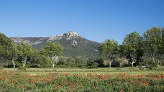Mont Olympe *---- °-° (Titole) Tags: trees mountain poppies provence sycamores platanes trets challengeyouwinner montolympe titole nicolefaton