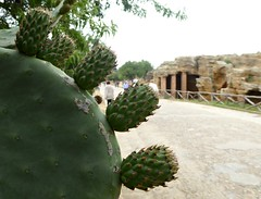 Prickly Pear. (jenichesney57) Tags: green cacti ruins panasonic sicily pricklypear valleyofthetemples