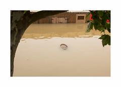 Une mise en Seine... (hlne chantemerle) Tags: paris seine river flow photographie flood barrel pluie barrique extrieur muddy inondation urbain nuageux photosderue cruemaijuin2016