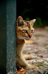 Meow..! (Der Explorer) Tags: pet animal cat kitten outdoor