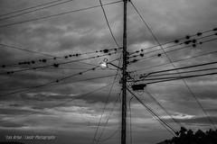 La Convergencia (Lex Arias / LeoAr Photography) Tags: sky blackandwhite blancoynegro monochrome clouds monocromo nikon iron venezuela iglesia monochromatic oxido bn cables wires cielo nubes cinematic barquisimeto 2016 nikond3100 leoarphotography lexarias iglexariasphotos