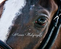 Pine Needles (EASY GOER) Tags: park horses horse sports belmont racing races thoroughbred equine