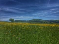 Blhende Wiesen (Blende2,8) Tags: wiese himmel gras baum blten waldrand