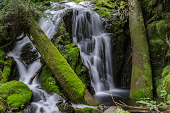 DSC09460.jpg (jjdun7) Tags: travel nature water oregon creek forest river landscape countryside waterfall stream lifestyle environment landforms 2016 2015 sardinecreek