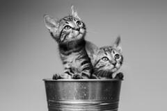 De gatitos en apuros. Silver y Tabitha! (Ral Barrero fotografa) Tags: cat gato pet mascota tender sisters