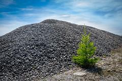 loner (Goddl) Tags: life new tree landscape outdoor stones steine landschaft baum loner gravel leben wasteland neues kies einde einzelgnger