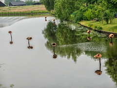 bird nests on water (maryannenelson) Tags: summer water netherlands birds unusual nests