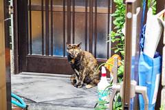 Today's Cat@2016-07-03 (masatsu) Tags: cat pentax catspotting mx1 thebiggestgroupwithonlycats