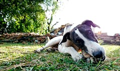 Play Time (Rakesh Raut 321) Tags: life dog pet cute love dogs animals fun happy village play positive