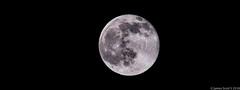 20160620 70D Strawberry Full Moon 25-HDR (James Scott S) Tags: palmbeach florida unitedstates us summer solstice full moon strawberry 1967 canon 70d sigma 150600 lrcc lunar luna