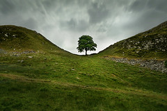 Sycamore Gap (PentlandPirate of the North) Tags: tree roman northumberland empire robinhood hadrianswall kevincostner sycamoregap princeofthieves