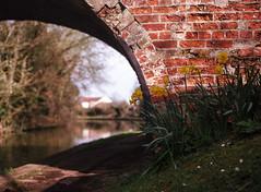 daffodil bridge (dougfot) Tags: england mamiya film lens canal miltonkeynes kodak daffodil mf f4 100asa cpl grandunioncanal 1250 bletchley 80mm ektar polariser m645 douggoldsmith