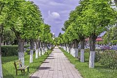 Baumallee im Jimbolia (Hatzfeld) (Abbe-Foto) Tags: tree green grn bume baum allee banat rumnien