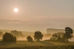 Frh am Morgen - Early in the morning (Der Gnurz) Tags: fog landscape nebel landschaft morningfog inthemorning morgennebel ammorgen
