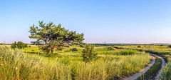 The Road to River (Alex Demich) Tags: road blue summer sky panorama tree green nature grass pine landscape evening track purple outdoor path horizon sunny ukraine steppe