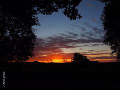 Dawn M6251144sm (Preselector) Tags: suttoncoldfield suttonpark bioblitz dawn