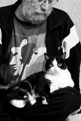 Ni te muevas!!!! (Egg2704) Tags: bw naturaleza byn blancoynegro animal retrato gatos retratos gato felinos felino animalia egg2704