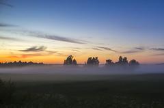 (Pauli Vallinmki) Tags: fog foggy sun tree