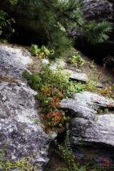 Cascade (Mark Kaletka) Tags: color mountrushmore mountrushmorenationalmemorial southdakota nationalpark natural nature park pine plants ponderosa rock stone tree vegetation keystone unitedstates us