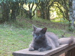 DSCN0817 (naterciacadorin) Tags: nature beautiful cat perfect mimi