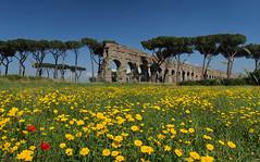 Crossroad (filippo rome) Tags: flowers italy rome roma spring italia day clear wildflowers fiori springtime parcodegliacquedotti