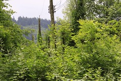 ds-B7-130608-099 (waferboard) Tags: green landscape pole foliage