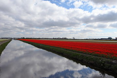 Tuliiiiiiiiiiiiiiiiiiiiiiiiiiiiiiiiiiiiiiips (Elios.k) Tags: red vacation sky flower color reflection travelling green water dutch field horizontal clouds canon river landscape outdoors photography canal spring stem scenery day cloudy perspective nederland thenetherlands nopeople tulip typical touristic endless blooming lisse bollenstreek openfield southholland bulbregion seasonaltourism 5dmkii